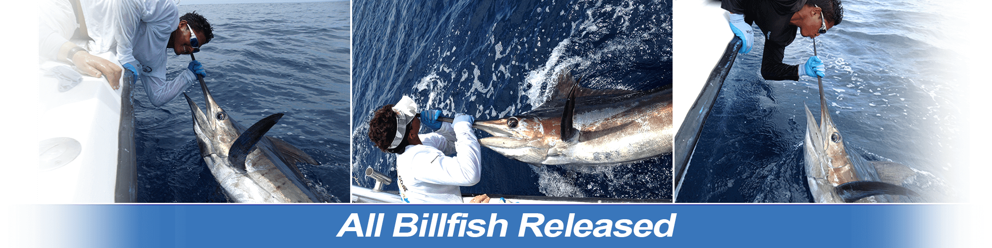 All Billfish Released